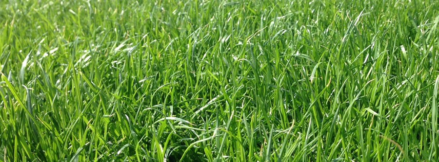 INTERGREEN_XTRAGRASS_Slideshow_003